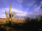 Cactus dans le désert Fonds d'écran
