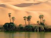 Oasis au milieu du désert Fonds d'écran