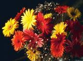 Fleur Fonds d'écran