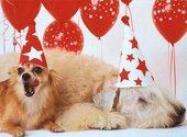 Souhaiter la bonne année avec des chiens Fonds d'écran