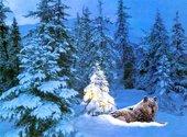 Loup en forêt Fonds d'écran