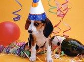 Chien beagle bourré Fonds d'écran