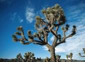Cactus Fonds d'écran