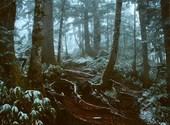 Forêt Fonds d'écran