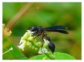 Pour le nectar Photos
