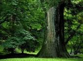 Tronc d'arbre vu de profil Fonds d'écran