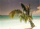 Caraibes Fonds d'écran