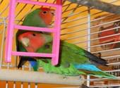 Oiseaux Photos