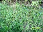 Fleurs de montagne ( 4 ) Photos