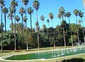 Bassin et palmiers, jardin d'essai - alger Fonds d'écran