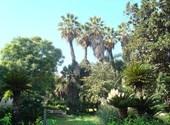 Palmiers du parc de galland - alger Fonds d'écran