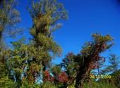 L'automne met ses couleurs Fonds d'écran