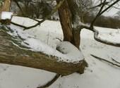 Arbre en neige Fonds d'écran
