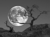 Lever de lune Fonds d'écran