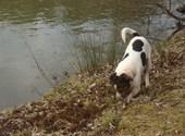 Mon chien Photos