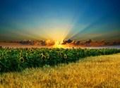 Coucher de soleil Fonds d'écran