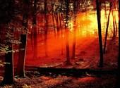 Silhouettes d'arbres aux couleurs de feu Fonds d'écran