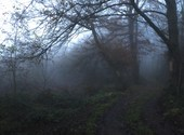 Brouillard Fonds d'écran