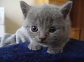Un amour de chat Photos
