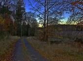 Chemin forestier Fonds d'écran