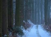 Averse de neige Fonds d'écran
